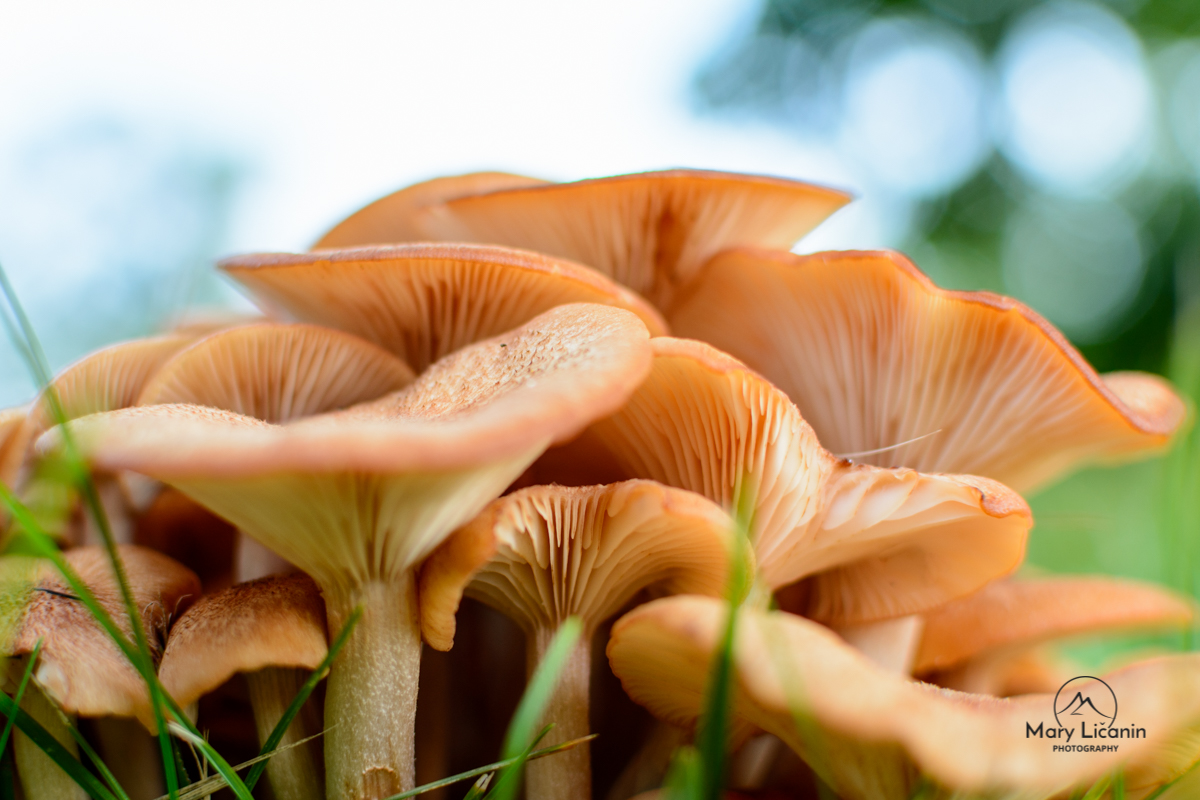 Mushrooms in Sun by Mary Licanin Fine Art Photography