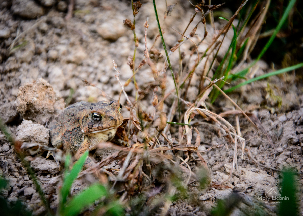 Little Frog by Mary Licanin Fine Art Photography
