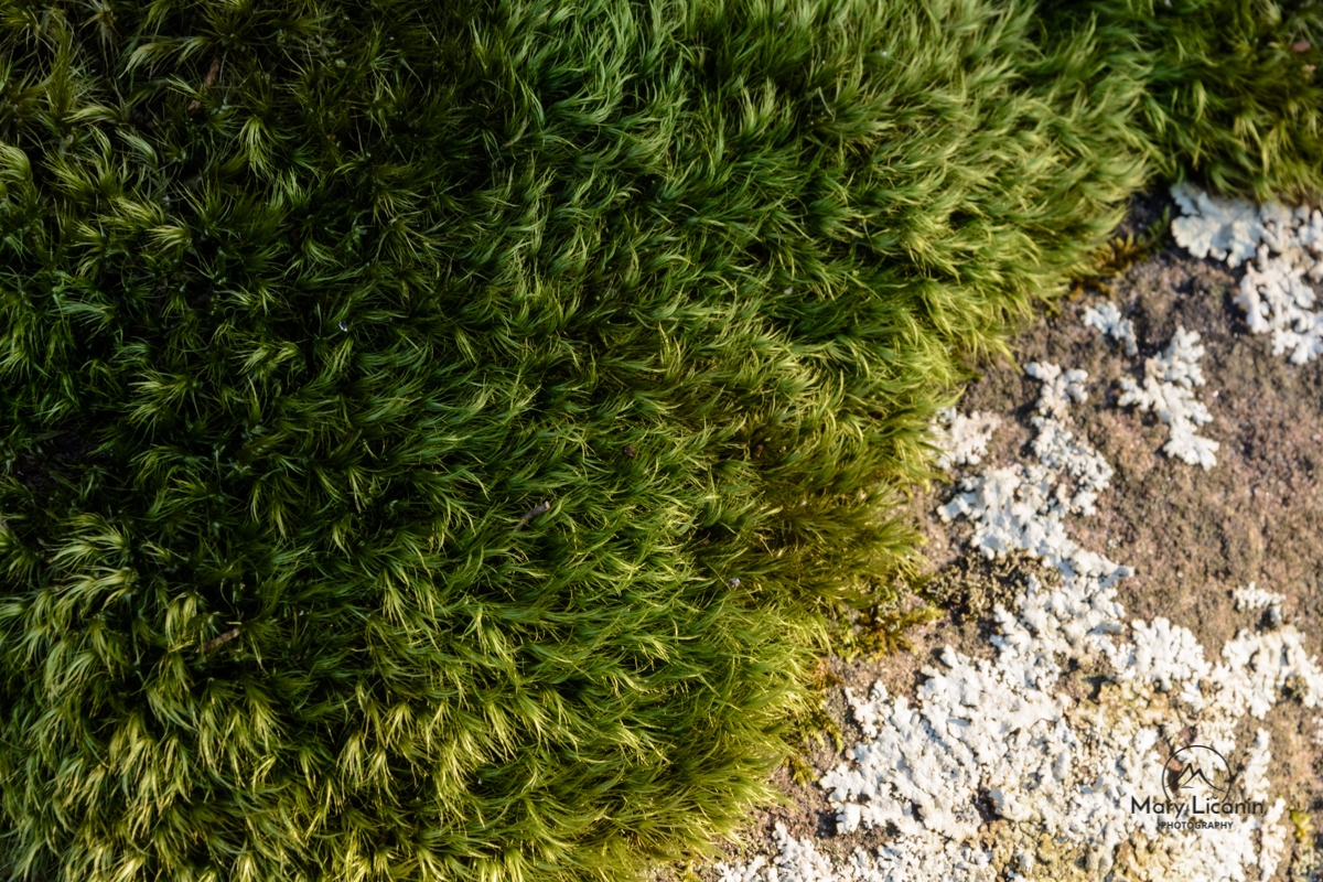Mother's Carpet by Mary Licanin Fine Art Photography