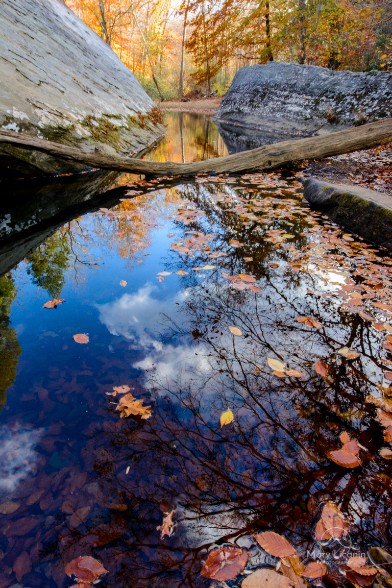 Autumn Reflections by Mary Licanin Fine Art Photography