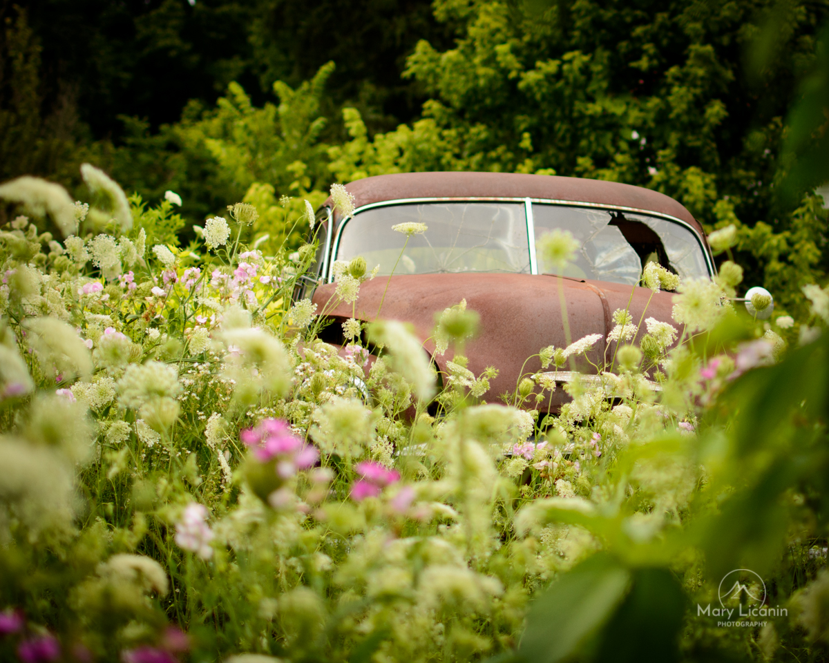 VW Beetle in a Garden by Mary Licanin Fine Art Photography
