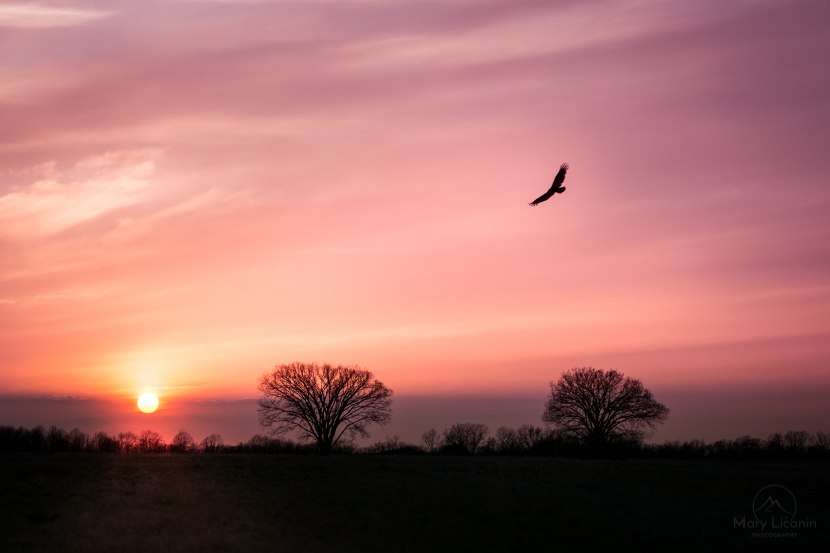Flying Free by Mary Licanin Fine Art Photography